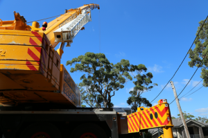 Arborists remove tree with crane